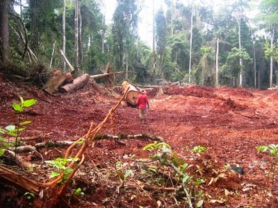 Unscrupulous timber exploiters deplete Cameroon's rich forests